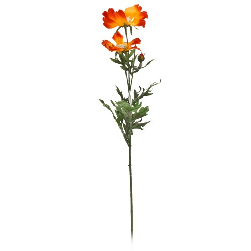 Orange Cosmos Spray