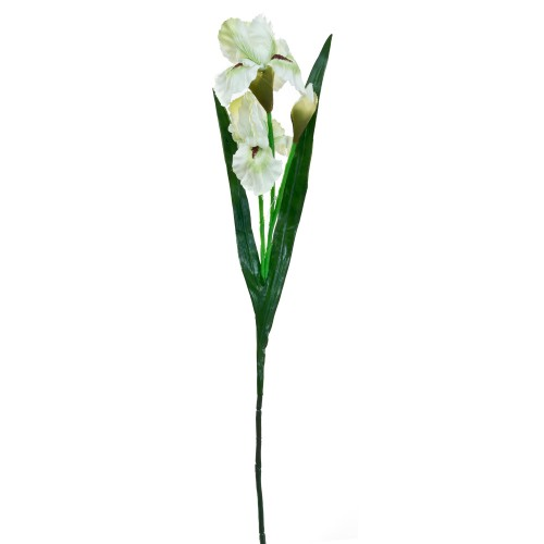 Casa Iris Flower