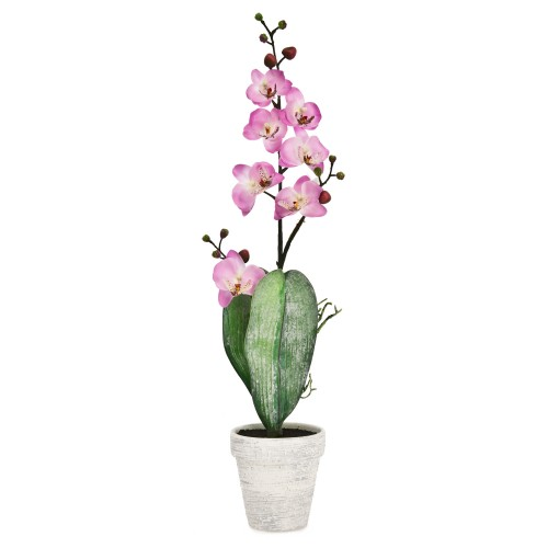 Orchid In Pot Pink Pot