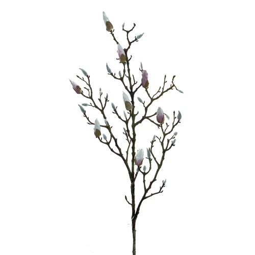 Casa Magnolia Branch