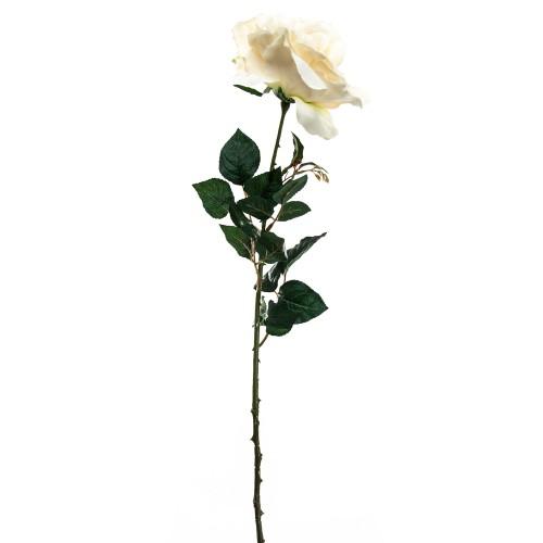 Casa Long Rose Cream, Cream