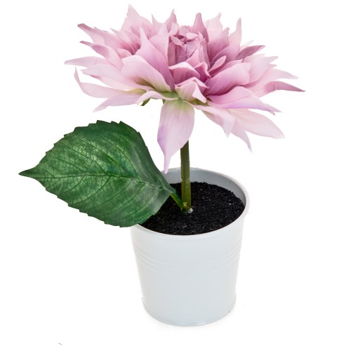 Casa Lilac Dahlia In White Pot, Purple