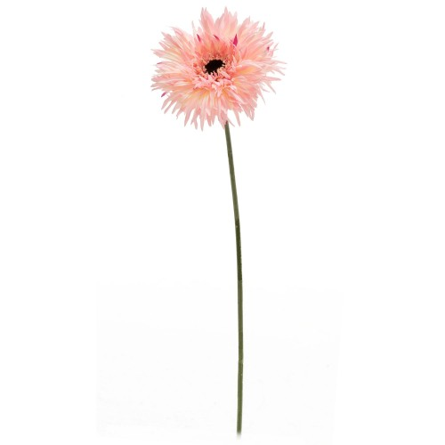 Casa Single Giant Chrysanthemum, Pink