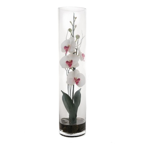 Casa Phalaenopsis In Glass, Cream/orchid