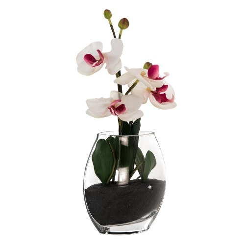 Casa Phalaenopsis In Glass, Cream Orchid