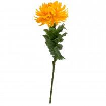 Casa Single Chrysanthemum, Yellow
