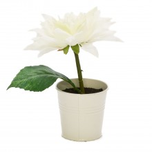 Cream Dahlia In White Pot, Cream