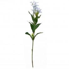 Forsythia X 3, Blue