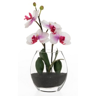 Casa Phalaenopsis In Glass, Red Lavender